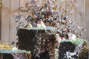 water-feature-with-bird-small